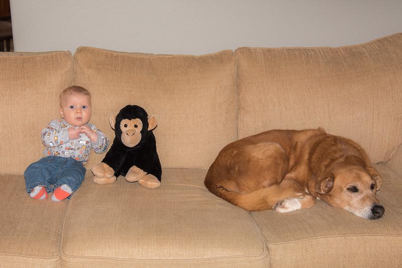 Three monkeys!
