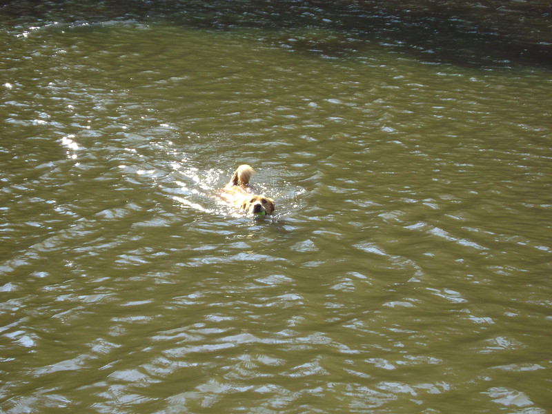Sam loved to swim and fetch balls.  She was such an athlete!