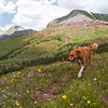 Durango, Colorado.  Beautiful pup, beautiful nature.