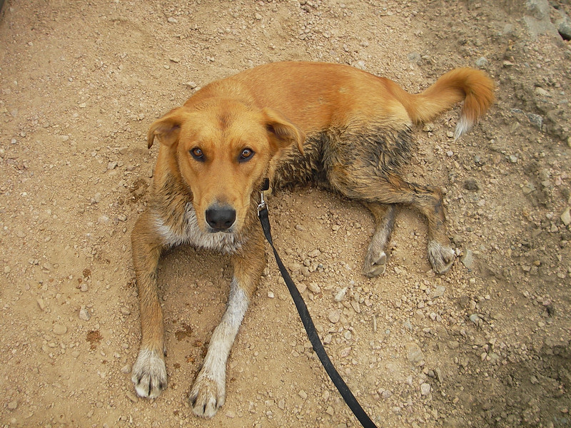 She climbed the whole mountain and stayed clean but took a swim in the marsh at the very end.