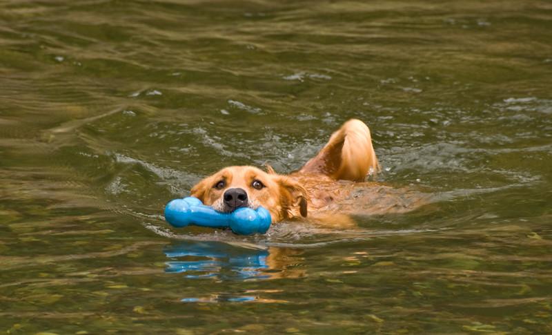More swimming Sam.