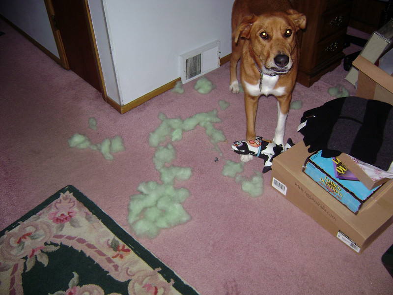 No toy lasted more than a minute with Sam.