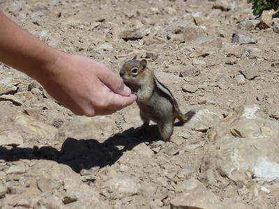 Even the chipmunks are brave here.