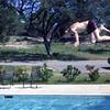 Salado swimming pool