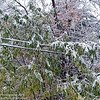 Say goodbye to the power lines.  Heavy, snow laden branches, sagged upon the wires and brought them down all over New England.