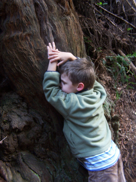 Dylan the tree hugger