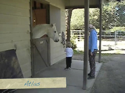 Grant feeding his horse friends a short video to enjoy.