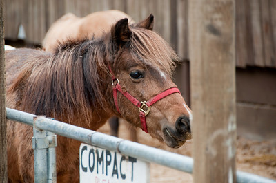 This pony wonders if Grant has some food for him.