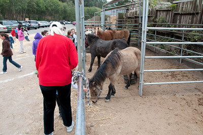 Eivor and Grant go up to feed the ponies.