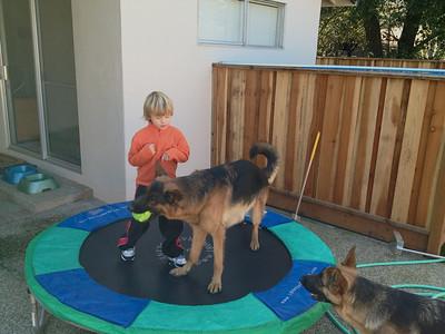 Saxon, Monty and Mia at play. (I-Phone Photo)
