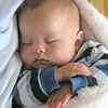 Max, sleeping