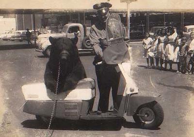 dick officer bear (2)