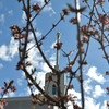 Spring at the Mt. Timpanogos Temple, American Fork Utah.