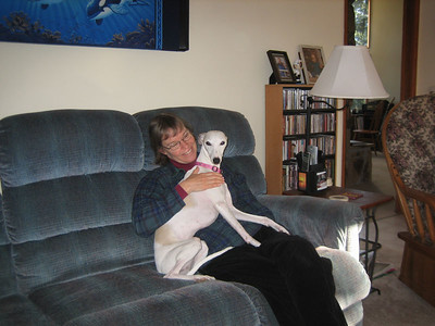 Whippets are surprisingly cuddly!
