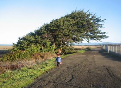 Mateo and the big wind-blown tree