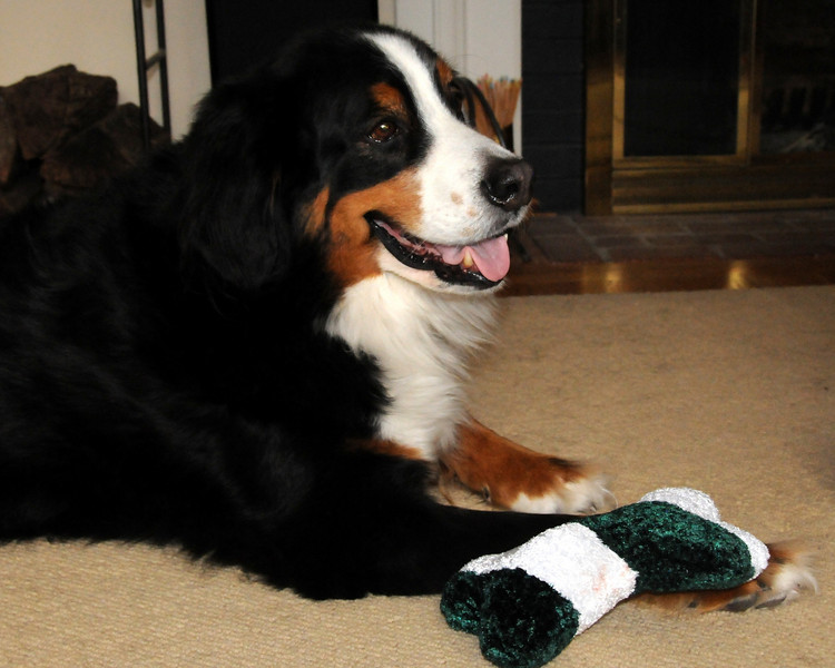 Beau enjoying his Christmas gift