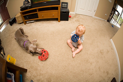 Chew toys for two.