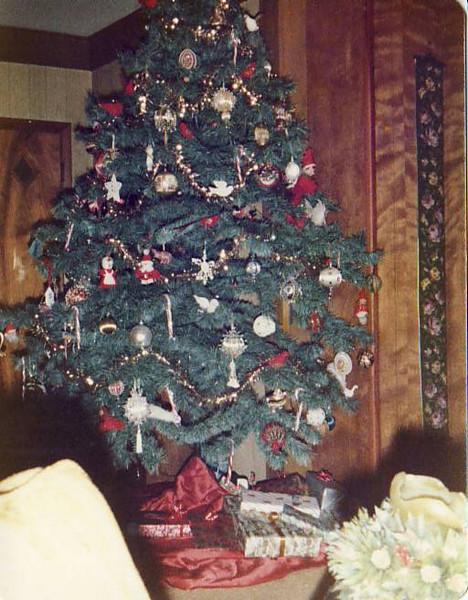 Bob & Donna's Tree 1978