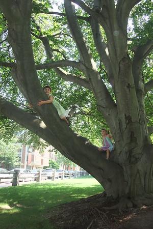 Treehugger.