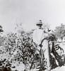 Will in the corn field