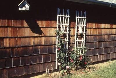 HCA-19910613-Roses 825 Briarcliff 3