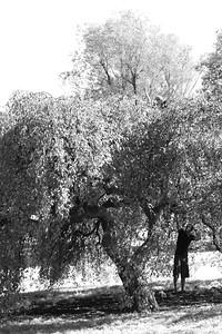DSC_7794 infrared