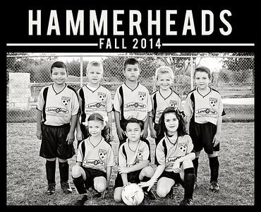 hammerheads copy