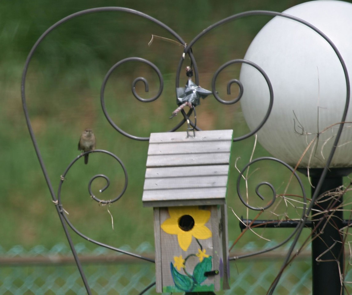A Wren and it's nestbox