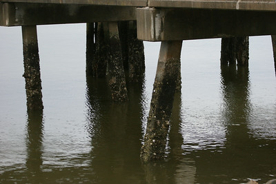 Pilings under dock at Daufuskie