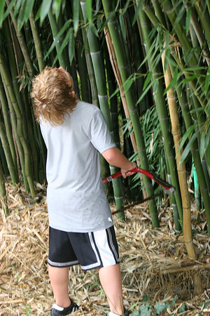 Wyatt trying to choose the next bamboo stalk for cutting