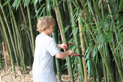 Wyatt attacks Catherine's bamboo