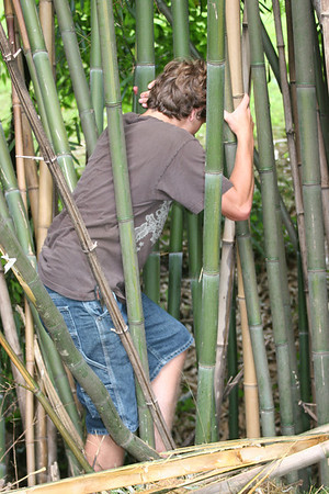Caleb attempting to get down to the little creek behind Catherine's bamboo