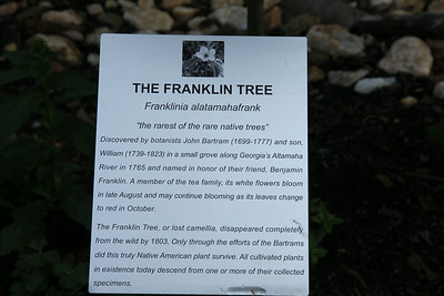 description of the Franklin Tree