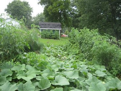 Laird's lush garden, with rabbit !