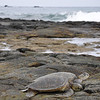 Turtles sunning themselves on the rocks.