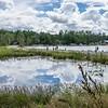 Viper Pond