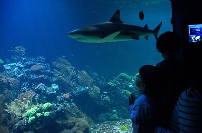 Hellabrunn -  Aquarium