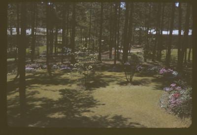 3205 Wynn backyard 63