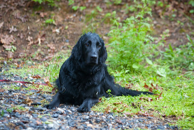 The dog all wet.