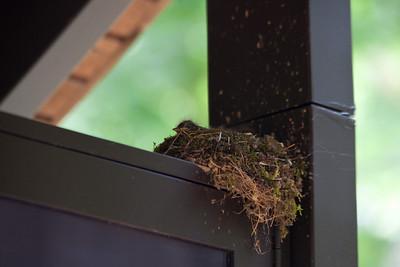 A bird's nest with the little chicks.
