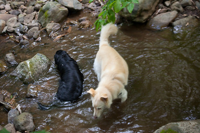 Shadow loved jumping into any stream he could find and Cava loved to keep him away from the trail after that.