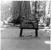 Yosemite 57-7a
