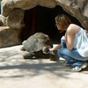 Junior the Galapagos tortoise.  He is about 14 years old.