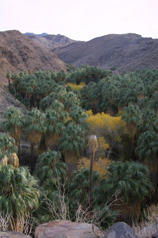 2002 Two Bunch Palms