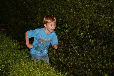 Charging through the hedges.