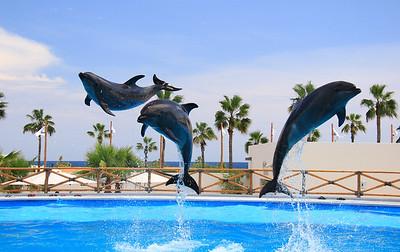 Dolphin Always (21)