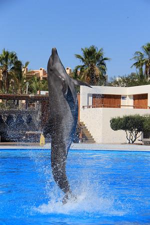 Dolphin Always (14)