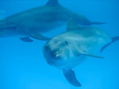 Dolphin Always (4)