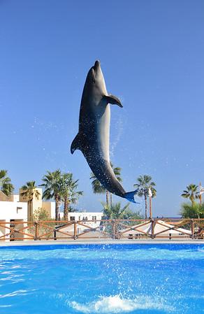 Dolphin Always (11)