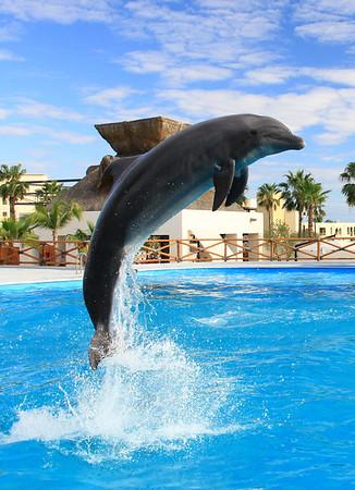 Dolphin Always (10)
